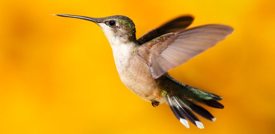 How does Google's Hummingbird Update Impact Social Media Marketers?
