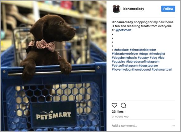 Petsmart hashtag competition