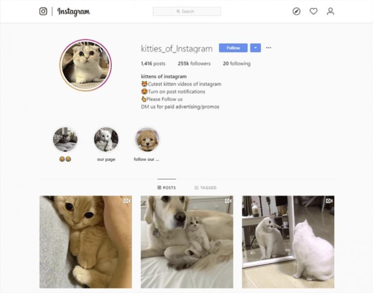 Instagram Promotion - Image 8