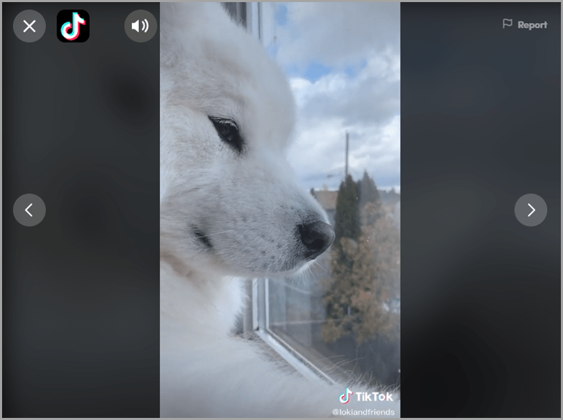 TikTok the fastest-growing video-sharing app IGTV
