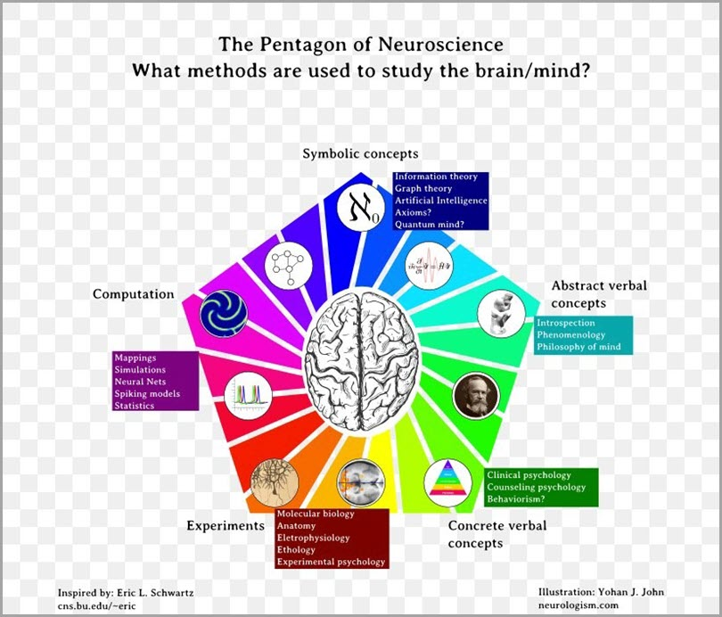 neuroscience-of-creativity-pentagon-of-neuroscience