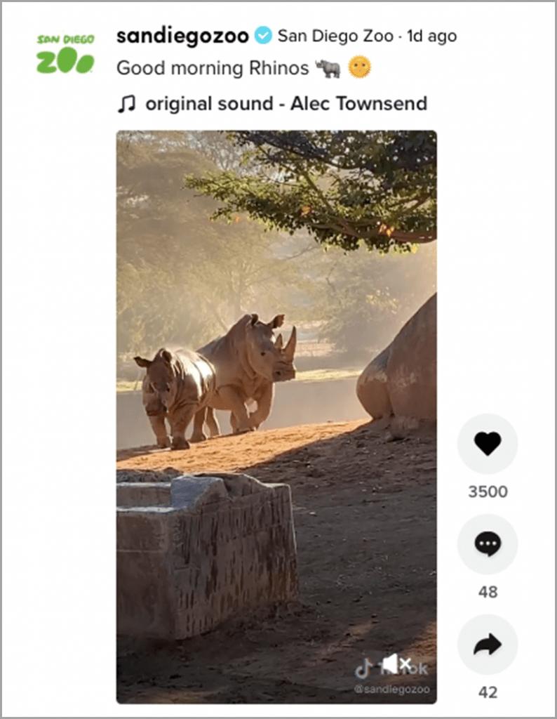 Sandiegozoo-Rhinos-Original-Sound-Alec-Towsend